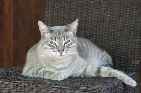 Gray Cat at Tassajara by Valerie Boquet