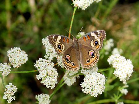 Tassajara butterfly