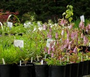GGF_plantsinplasticpots