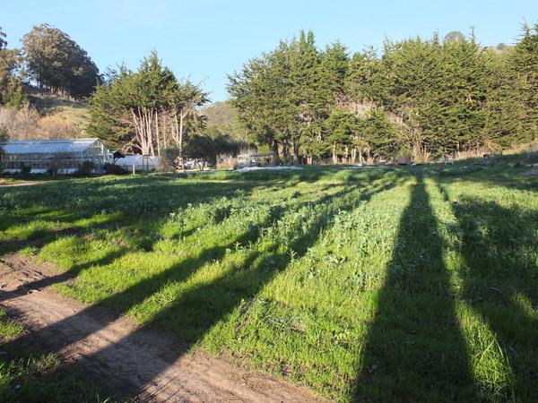Winter evening shadows at Green Gulch Farm.