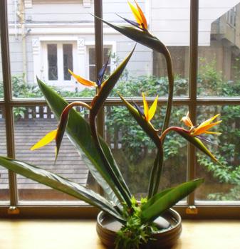 Stairflowers_001_x350