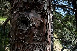 texture_stump_DQuinnDSC_2495-crop
