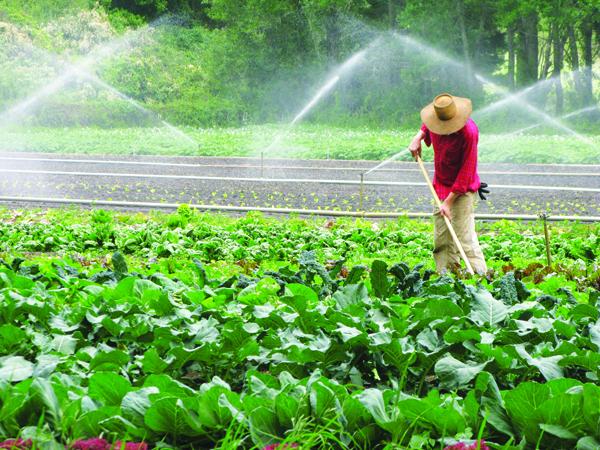 69_irrigation_x600