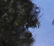 Creek spot ripples_shundo_banner