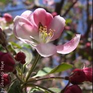 ZMC_flower