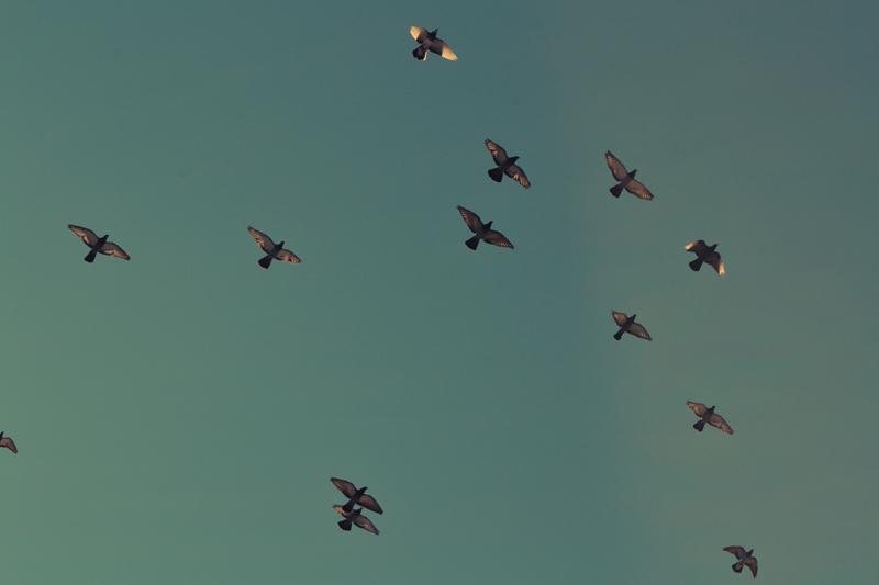 flock_800