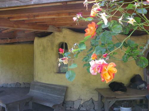 Roses at Green Gulch Farm