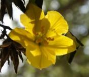 Tassajara Flower by Valerie Boquet