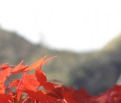 Mountains and Fall Colors