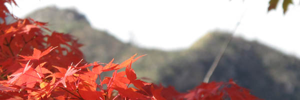 Tassajara Fall Colors and Mountains