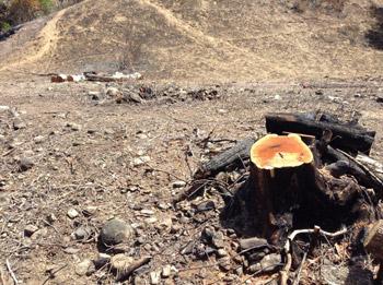 TassFire-2013-Burnt-Cut-Stump_x350