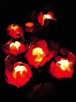 Chinese_floating_lotus_lanterns_x200
