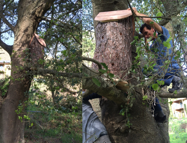 Inspecting the new log hive.