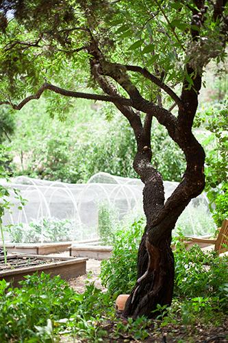 Tassajara-ZMC-Herb-Garden-by-Margo-Moritz