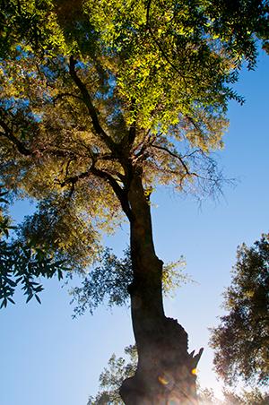 Tassajara-Bright-Tree-by-Zohra-Kalinkowitz