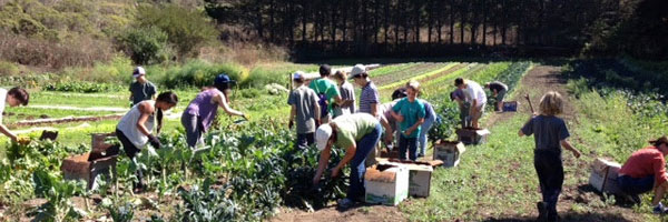 Early Fall News and Reflections from Green Gulch Farm