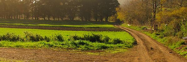 Gleaning at Green Gulch Farm, October 14