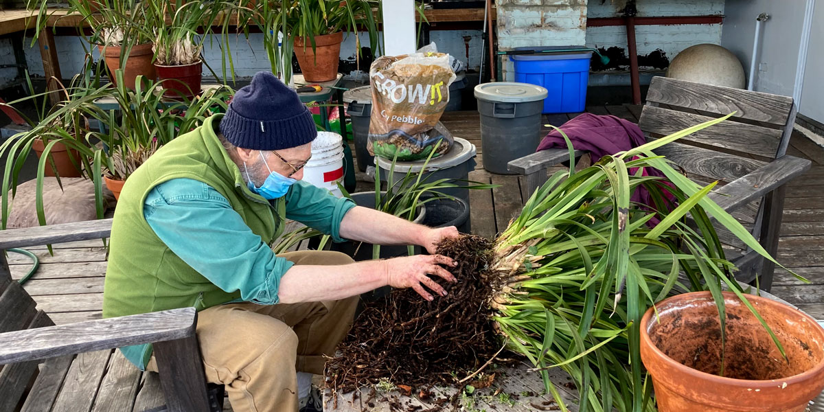 New Life for Suzuki Roshi's Orchids