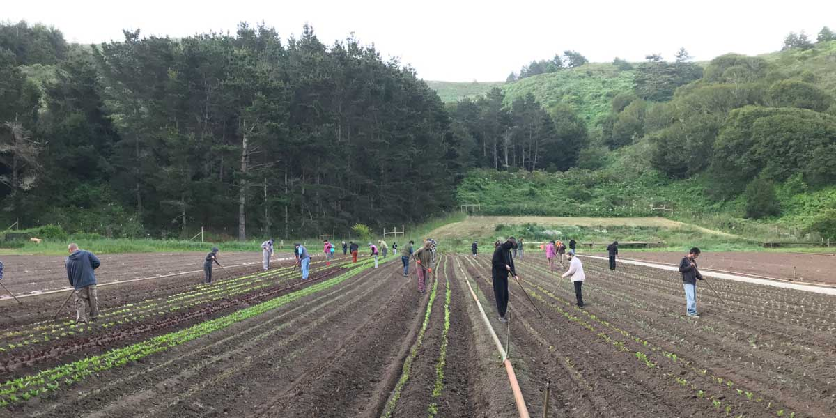 Green Gulch Farm Apprenticeship Program Returns