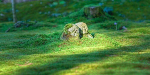 Buddhas and grass