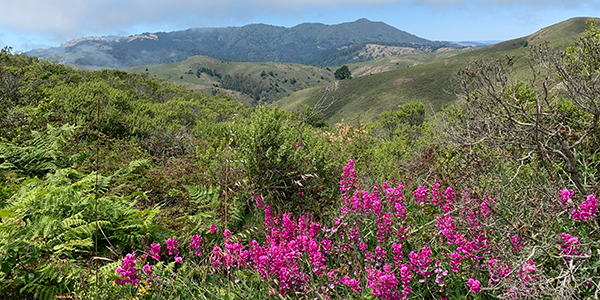 View of Marin hills