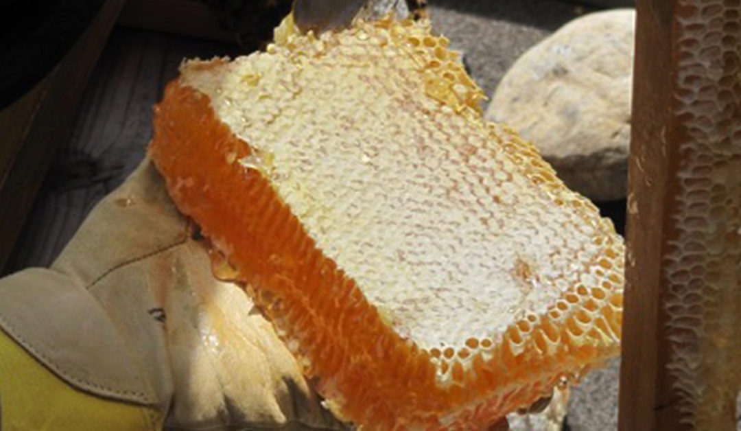 A Bountiful Honey Harvest at San Francisco Zen Center